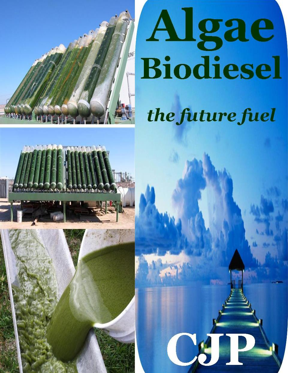 How algae could help solve some of the world's biggest problems