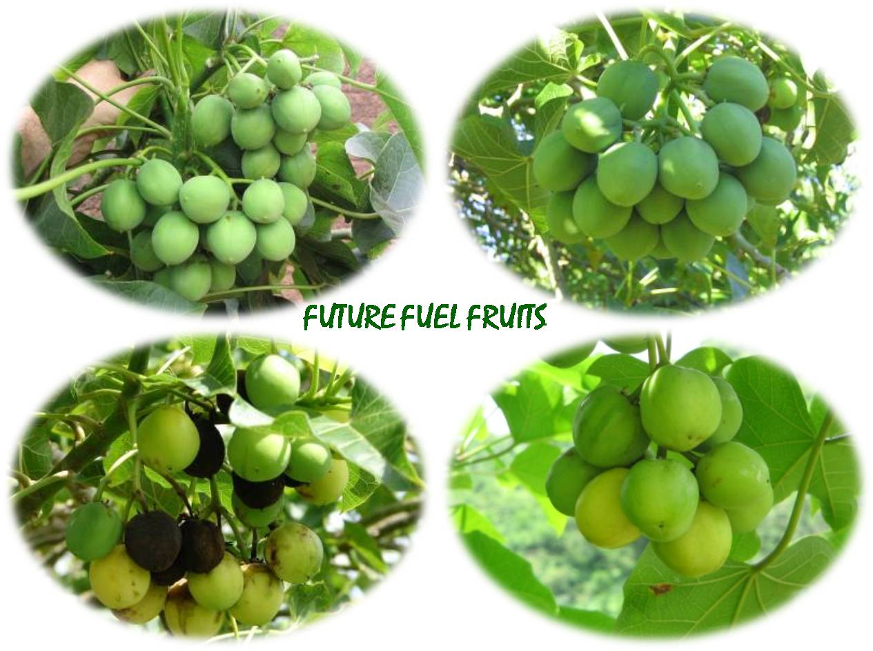 FUTUREFUELFRUITS