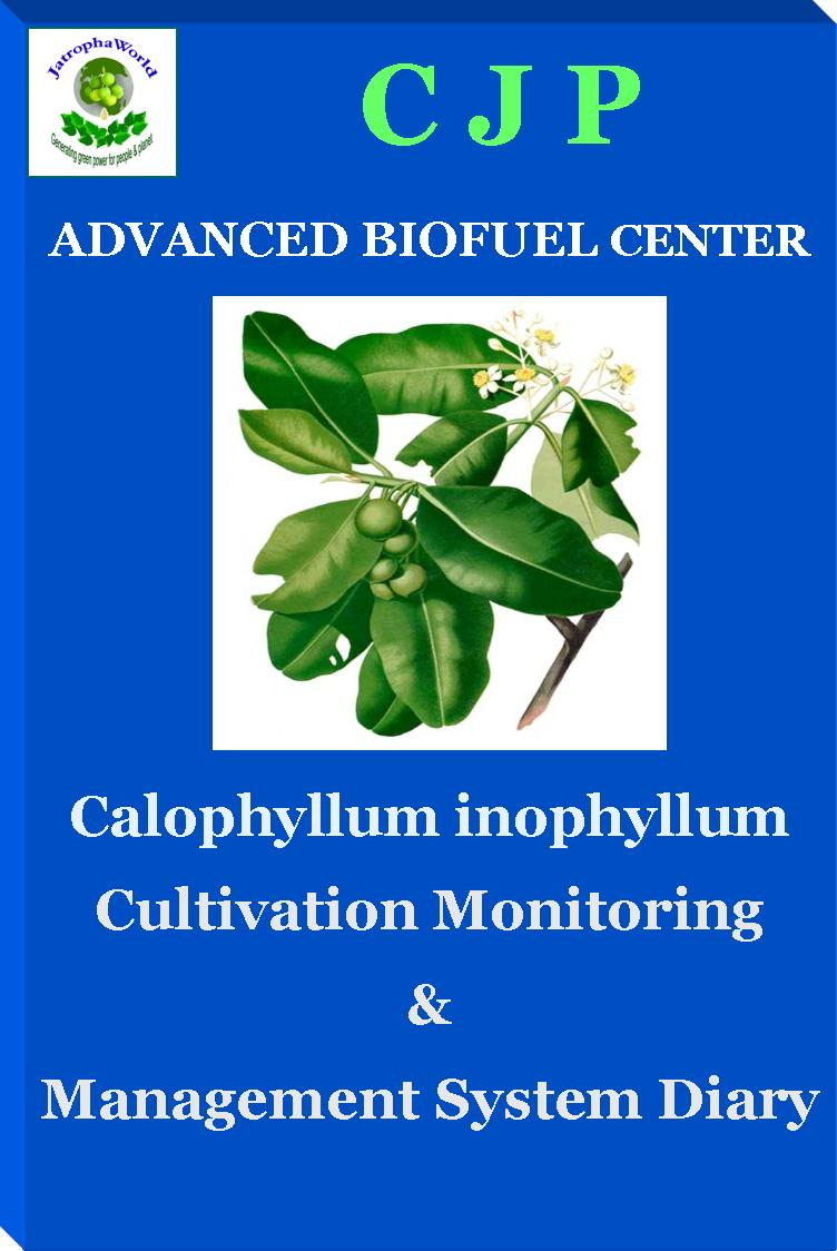 calophyllum management