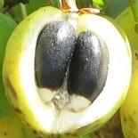 sriphlfuelfruit06