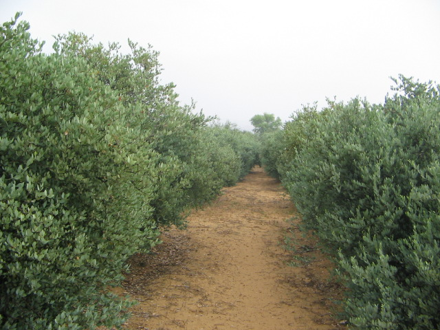 FAILSAFE JOJOBA FARM CJP